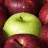 Over appels bewaren