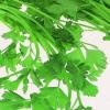 Apium graveolens secalinum bladselderij snijselderij bosselderij 300
